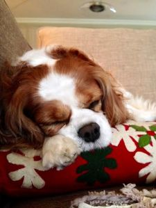 All Gracie wanted for Christmas was an uninterrupted, all day-long sleep.